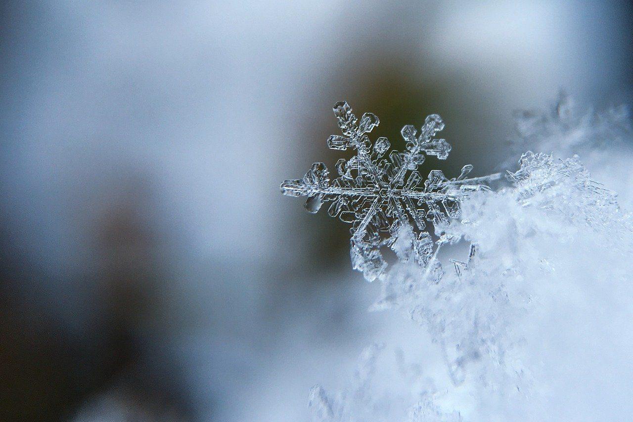 Quando fa freddo si spoglia. Cos'è?