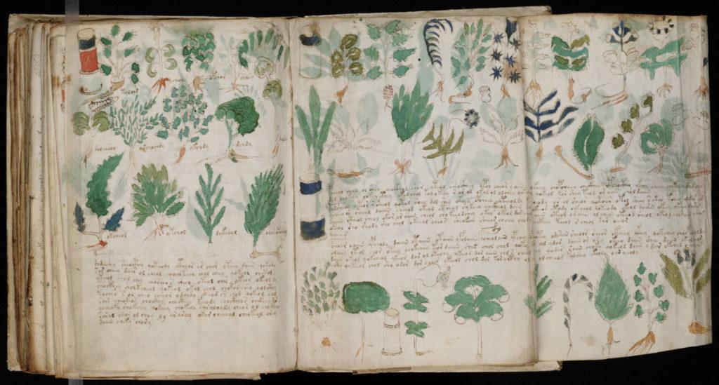 manoscritto voynich piante